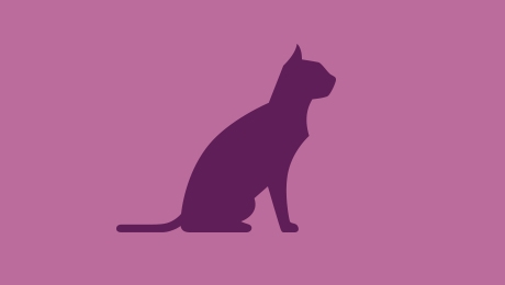 purple cat icon