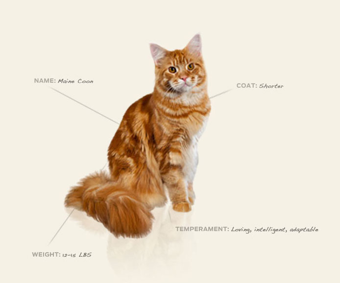 cat breed library