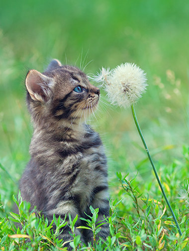 cat with dandelion